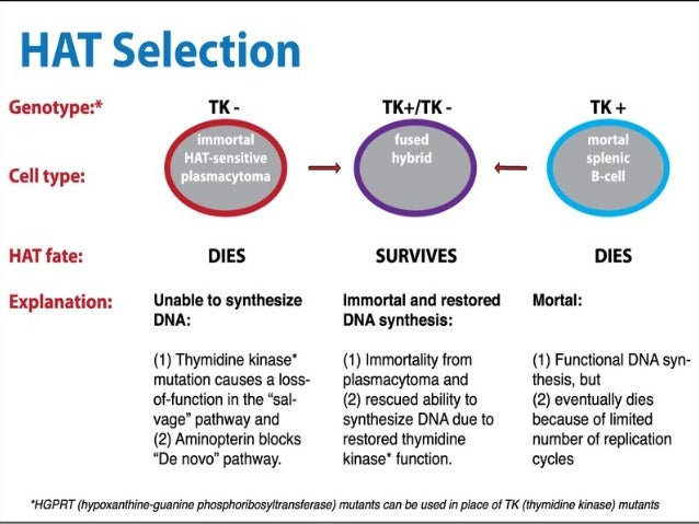 application of monoclonal antibodies in clinical diagnosis