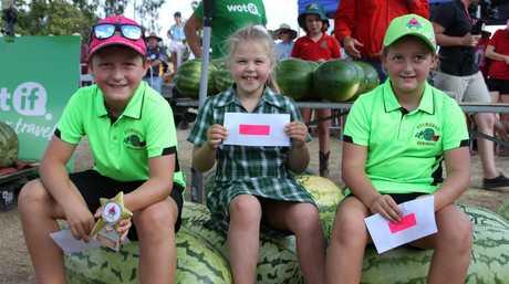 chinchilla melon festival application 2019